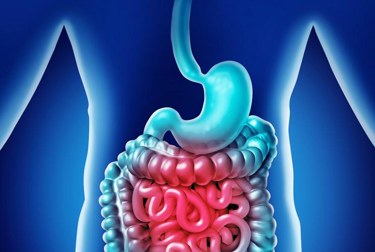 Ilustración de estómago e intestinos