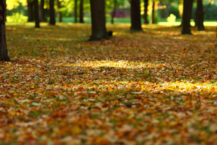 Imagen de bosque en otoño