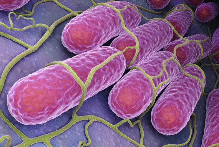 Imagen de una ilustración de microbiota