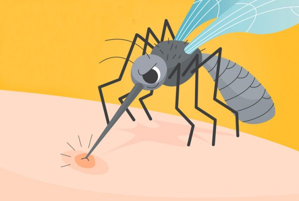 Mosquito picando ilustración